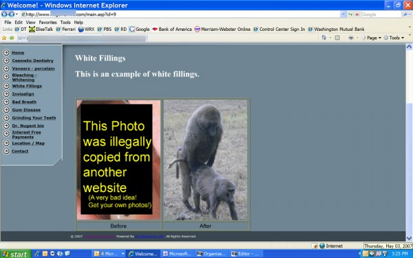 Baboons-on-website